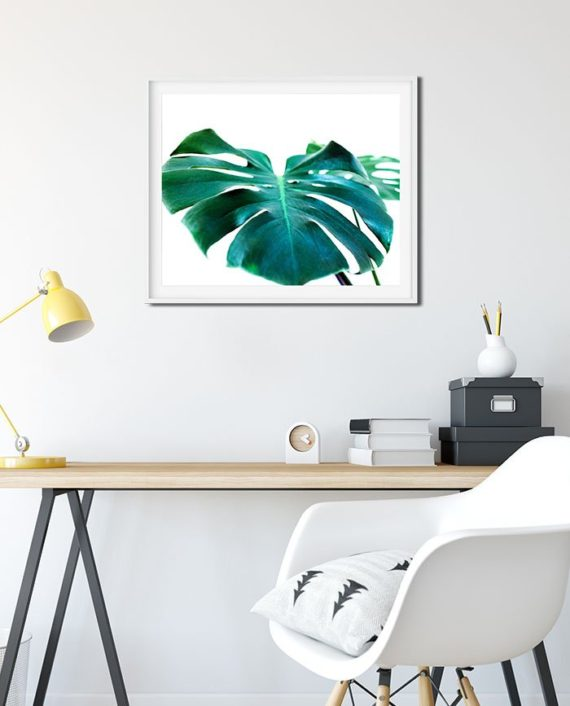 monstera leaf green tropical photography monstera deliciosa